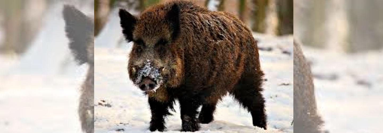 Teglskovens Hunting - jagtrejser til Sverige
