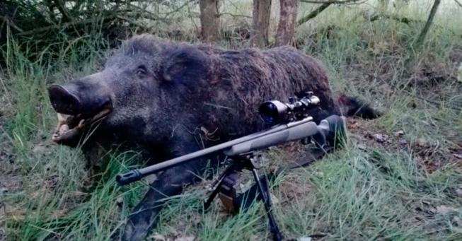 Teglskovens Hunting - jagtrejser til Polen